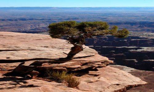 USA / Utah / Canyonlands / Island in the sky / Grand View PointTrail / samotne drzewo