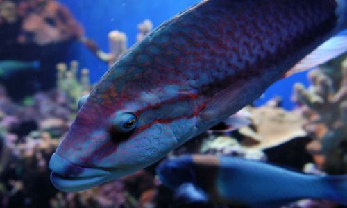 Zdjęcie USA / Hawaje / Maui / Ma'alaea / Oceanarium / oko w oko