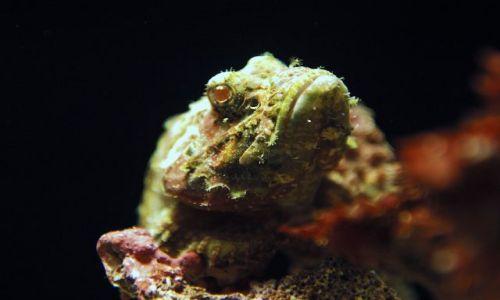 Zdjęcie USA / Hawaje / Maui / Ma'alaea / Oceanarium /