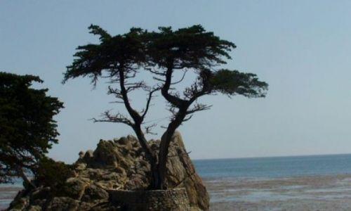 Zdjecie USA / California / 17 Mile Drive / Samoty CYPRYS...