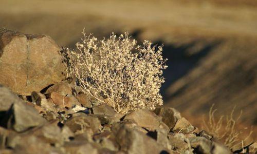 Zdjecie USA / California / Death Valley NP / jedyna forma życia w Dolinie Śmierci
