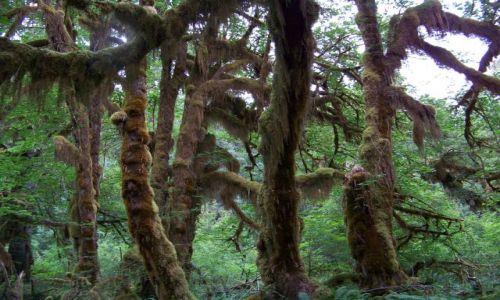 Zdjecie USA / brak / Washington (stan)/ polwysep Olimpic / las deszczowy strefy umiarkowanej 2