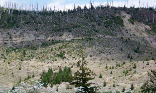 Zdjecie USA / brak / Washington, Mt. Helens / powalone drzewa
