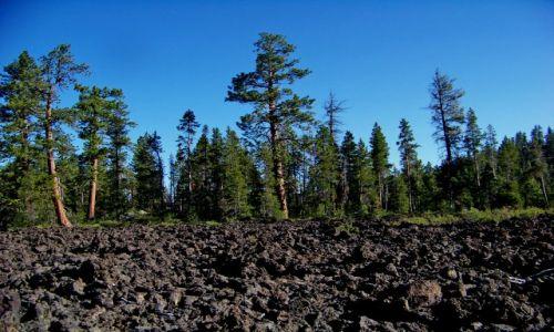 Zdjęcie USA / brak / Oregon / Lava Cast Forest