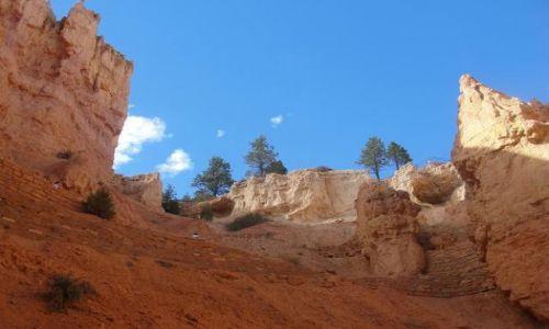 Zdjecie USA / Utah / Bryce National Park / Gleboki blekit podparty czerwonym zejsciem Bryce National Park