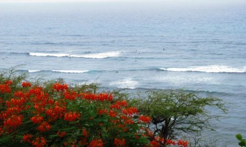 Zdjęcie USA / Hawaje / Oahu / Serferzy