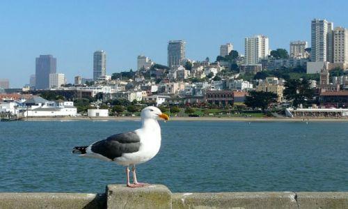 Zdjecie USA / Kalifornia / San Francisco / widok z mewą