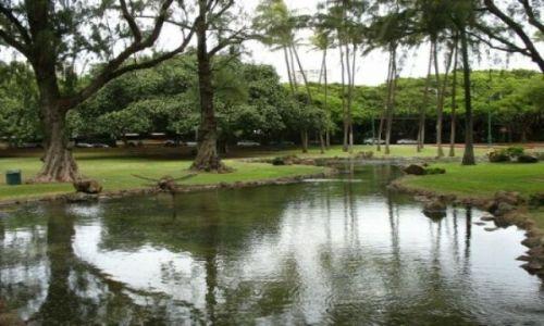 Zdjecie USA / Oahu / Honolulu / Tropikalny park