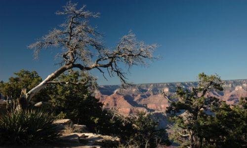 Zdjecie USA / Grand Kanion / Grand Kanion / Drzewo