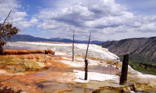 Zdjecie USA / Wyoming / Park Yellowstone / Mamoth Hot Springs