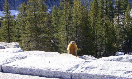 Zdjecie USA / Kalifornia / w drodze do Yosemite / dzień świstaka - czy mamy juz wiosnę?