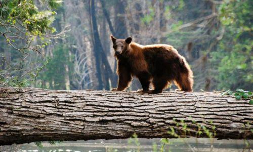 Zdjecie USA / Yosemite Valley / Stresujace / NIEDZWIADEK