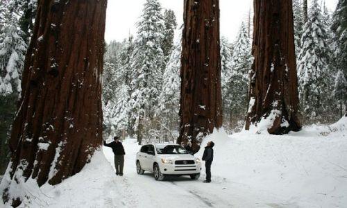 Zdjecie USA / California / Sequoia National Park / Duze tez jest piekne