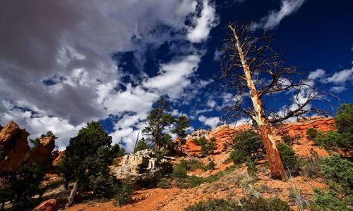 Zdjecie USA / stan Utah / Red Canyon / Red Canyon