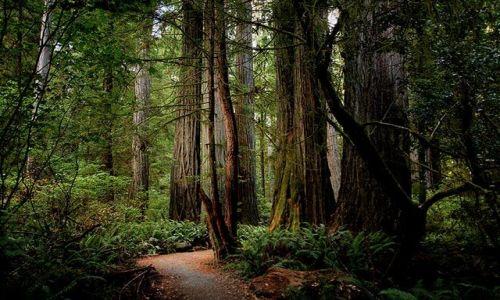 Zdjecie USA / stan Washington / Olimpic Park, Hoh Rain Forest / Las deszczowy