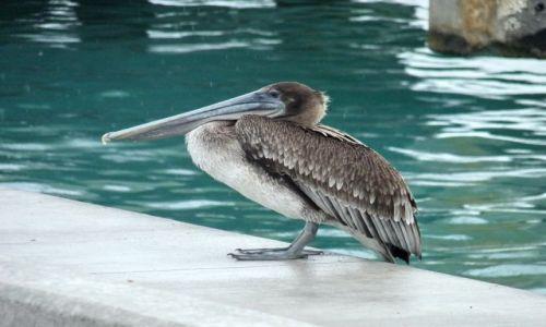 USA / Floryda / Key West / ptak na murku