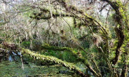 USA / Floryda / Tamiami Trail / Everglades