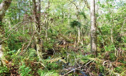 USA / Floryda / Everglades / Everglades