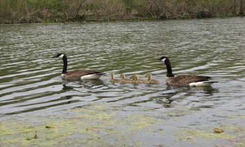 Zdjecie USA / Ohio / Newbury - Punderson State Park / KONKURS - rodzinne pływanie