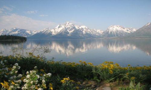 Zdjecie USA / Wyoming / Park Narodowy Grand Teton / KONKURS - oszalało... zakwieciło