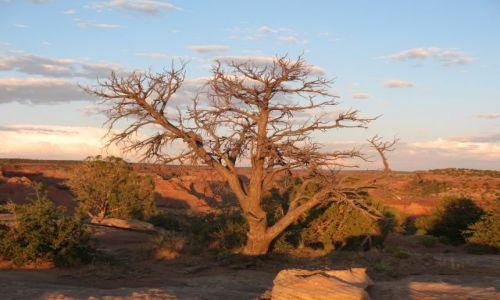 Zdjecie USA / Arizona  / Canyon de Chelly w rezerwacie Indian Navajo / Canyon de Chelly - o zachodzie