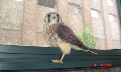 Zdjecie USA / Jersey city / Whitlock Mills / Falcon - na moim oknie