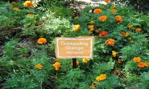 Zdjecie USA / Nowy Jork / Brooklyn- Ogród Botaniczny / Tęczowy Ogród Dziecięcy- poznawanie kolorów