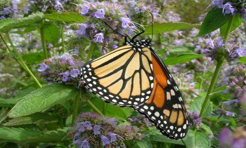 Zdjecie USA / Nowy Jork / Manhattan - Battery Park / ... motylku, jak Ci na imię?