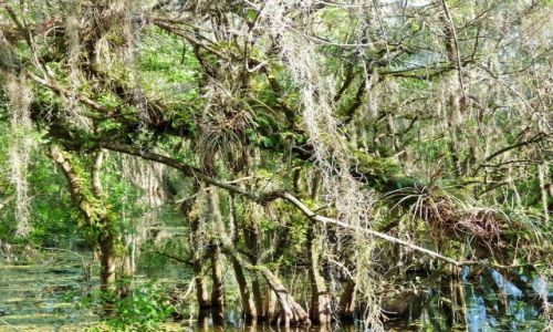 USA / Florida / Tamiami Trail / Rozlewiska