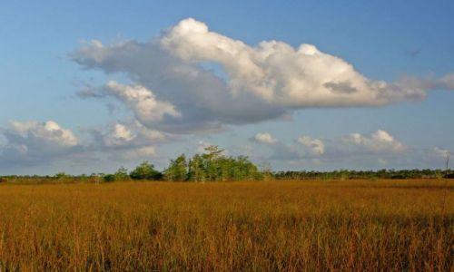 Zdjecie USA / brak / Floryda / Everglades National Park