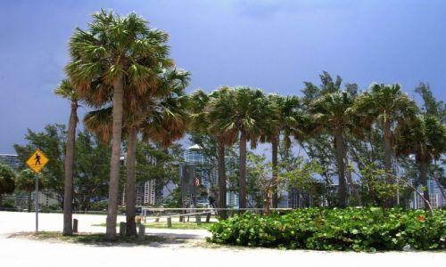 Zdjęcie USA / Floryda / Miami / wszędzie palmy