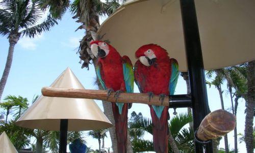 Zdjęcie USA / Floryda / Miami / papuzki