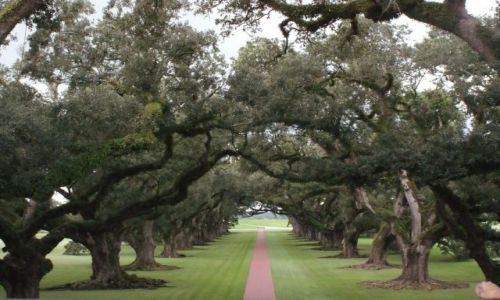 Zdjecie USA / luisiana / Oak Alley Plantation  / Oak Alley Plant