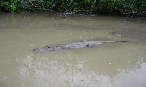Zdjecie USA / Floryda / Everglades / pan i władca bagien