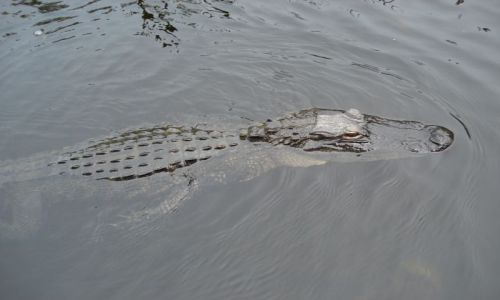 Zdjecie USA / Floryda / Park Narodowy Everglades /