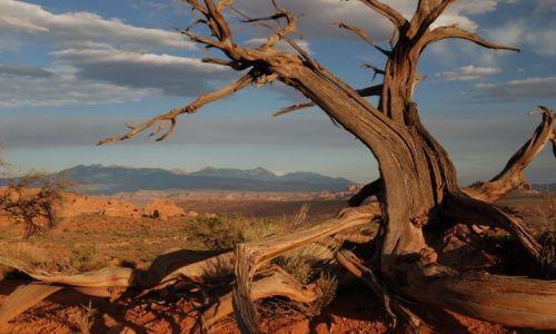 Zdjecie USA / Utah / Moab, Arches National Park / drzewko