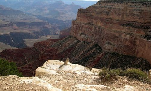 Zdjecie USA / - / Grand Canyon / Grand Canyon