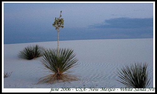 Zdjecie USA / USA / Nowy Meksyk / Biale Piaski - park narodowy w Nowym Meksyku (3)