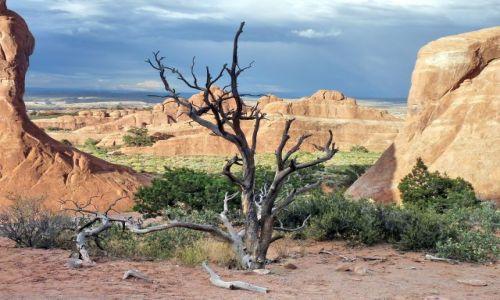 USA / Utah / Arches NP / Wyschnięte drzewko