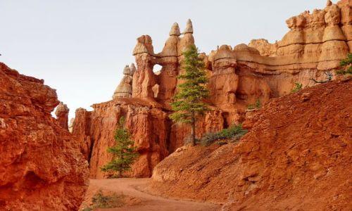 Zdjecie USA / Utah / Bryce NP / W drodze do Bryce Point
