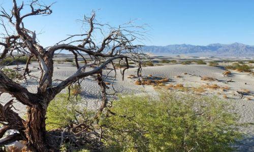 USA / California / Death Valley NP / Death Valley - mała Sahara