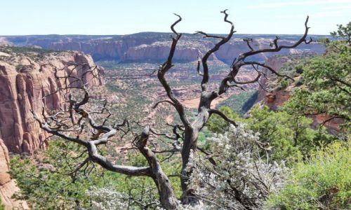 Zdjecie USA / Arizona / Navajo NP / Zabójczy widok