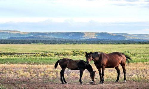 Zdjęcie USA / Colorado / Somewhere in Colorado / Rancho w Kolorado