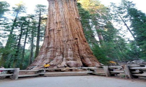 Zdjęcie USA / California / Sequoia NP / Na prawdę grube drzewo - Sherman Tree