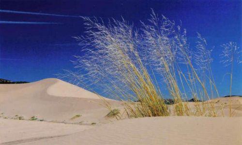 Zdjecie USA / arizona / coral dunes / usa