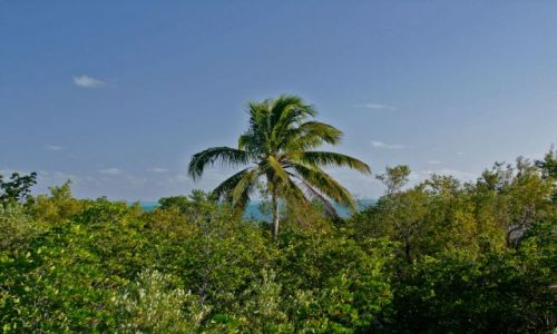USA / - / Floryda / Florida Keys / Long Key  / samotna