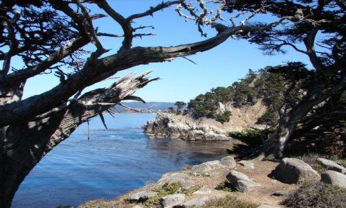 Zdjecie USA / Kalifornia / Point Lobos / Wybrzeże Pacyfiku