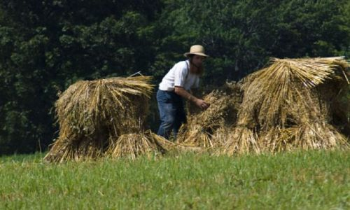 USA / USA / Painesville / Amish