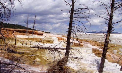 USA / Wyoming / Yelowstone Nat.Park / uwięzione .... w Mammoth Hot Springs