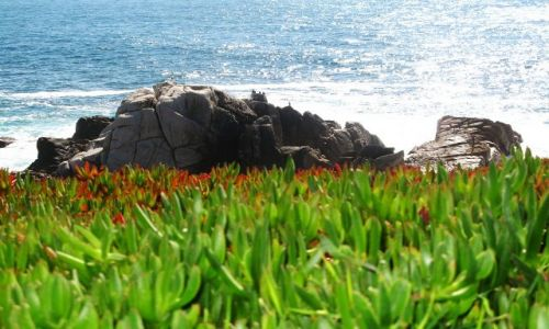Zdjęcie USA / California / Monterey / 17-mile Dr